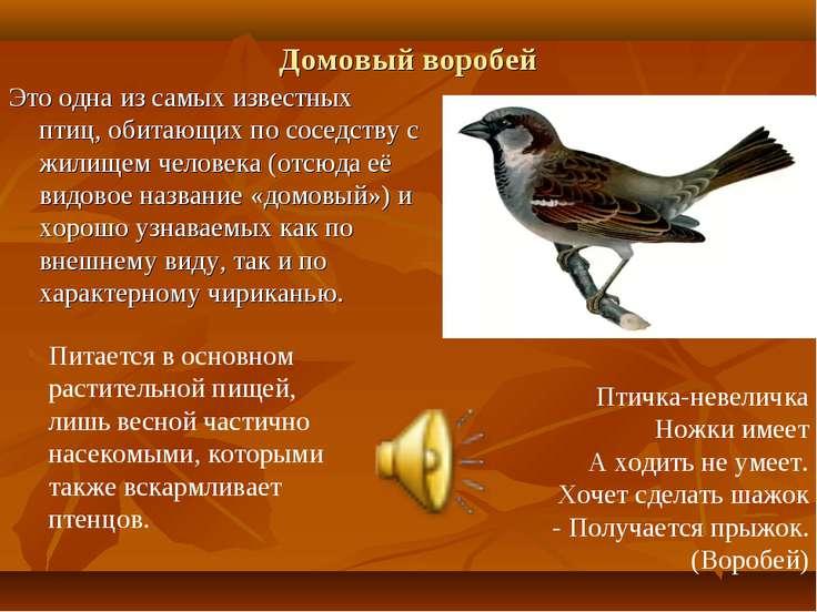 Домовый воробей Это одна из самых известных птиц, обитающих по соседству с жи...