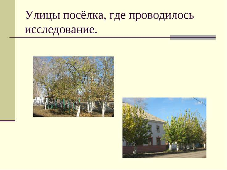 Улицы посёлка, где проводилось исследование.