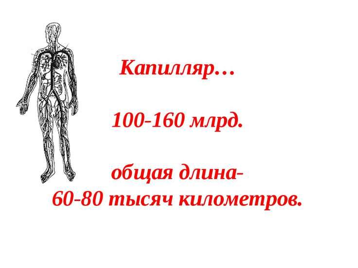Капилляр… 100-160 млрд. общая длина- 60-80 тысяч километров.