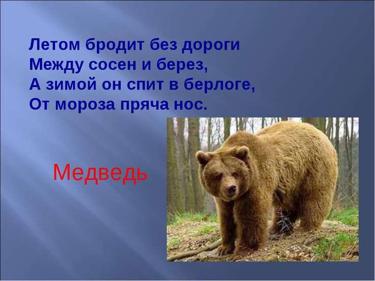 Летом бродит без дороги Между сосен и берез, А зимой он спит в берлоге, От ...