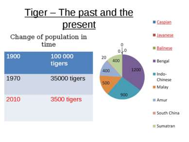 Tiger – The past and the present Change of population in time 1900 100 000 ti...