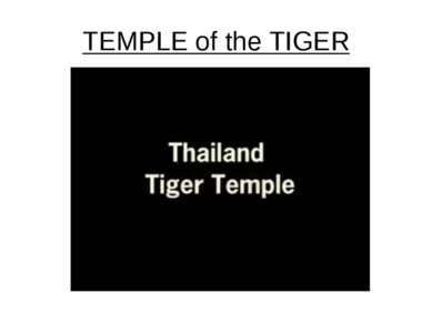 TEMPLE of the TIGER