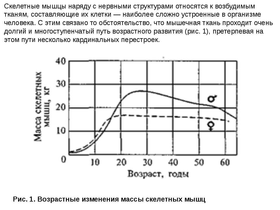 Рис. 1. Возрастные изменения массы скелетных мышц Скелетные мышцы наряду с не...