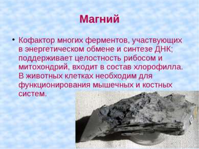 Магний Кофактор многих ферментов, участвующих в энергетическом обмене и синте...