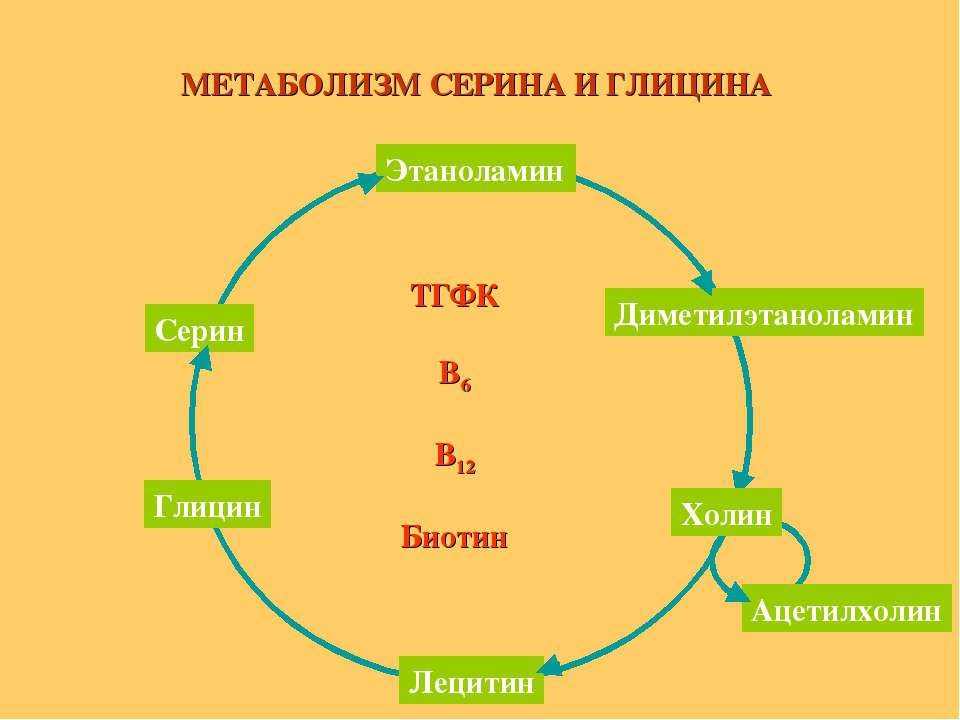 ТГФК В6 В12 Биотин МЕТАБОЛИЗМ СЕРИНА И ГЛИЦИНА Этаноламин Серин Глицин Лецити...