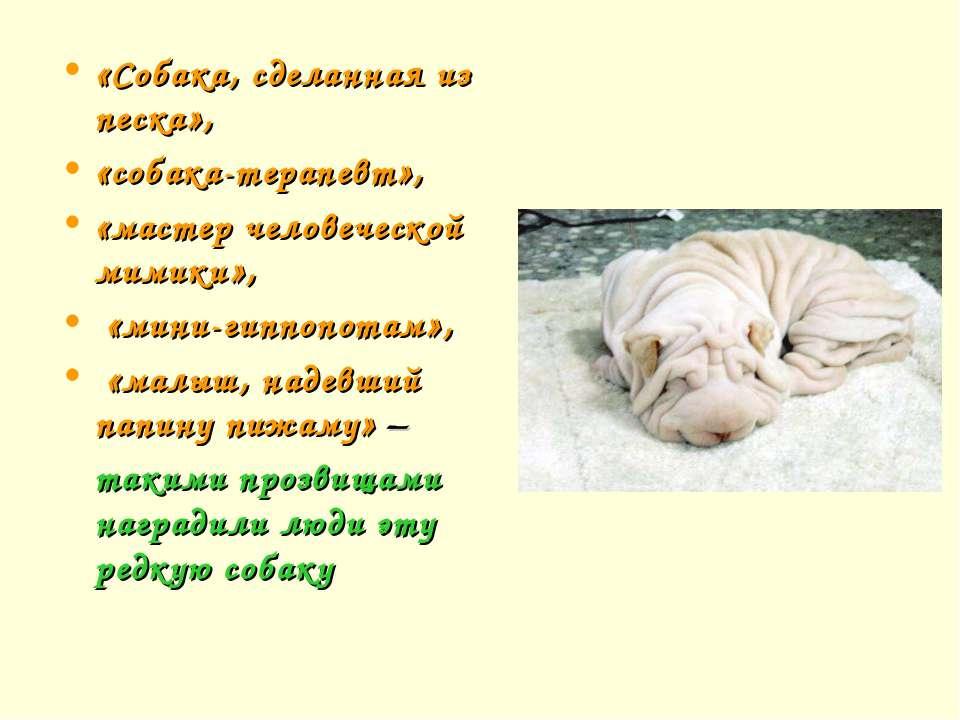 «Собака, сделанная из песка», «собака-терапевт», «мастер человеческой мимики»...