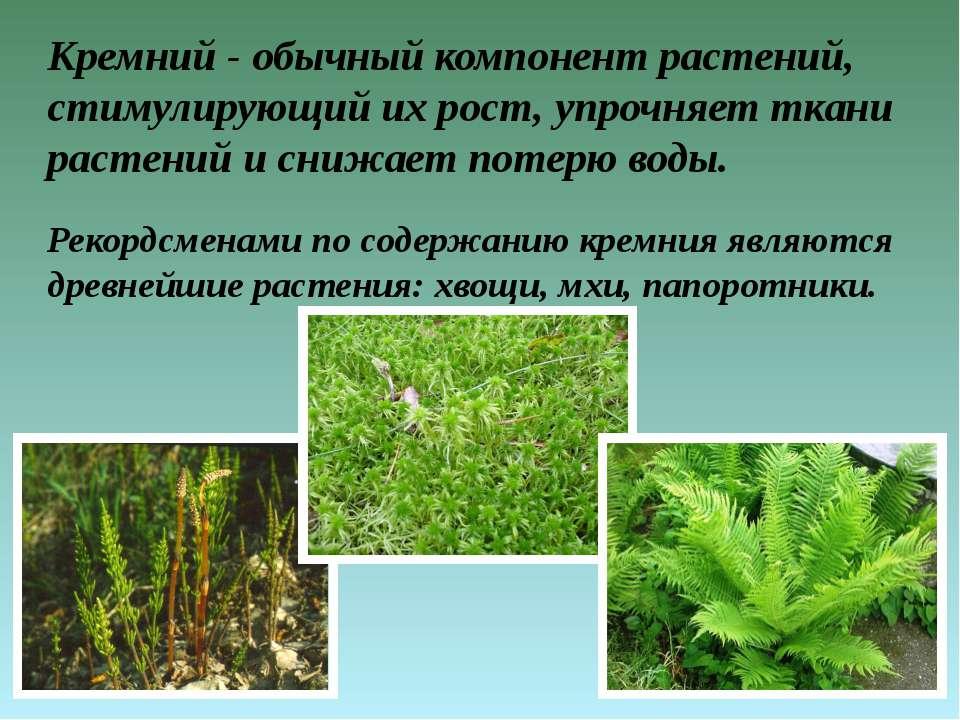 Кремний - обычный компонент растений, стимулирующий их рост, упрочняет ткани ...