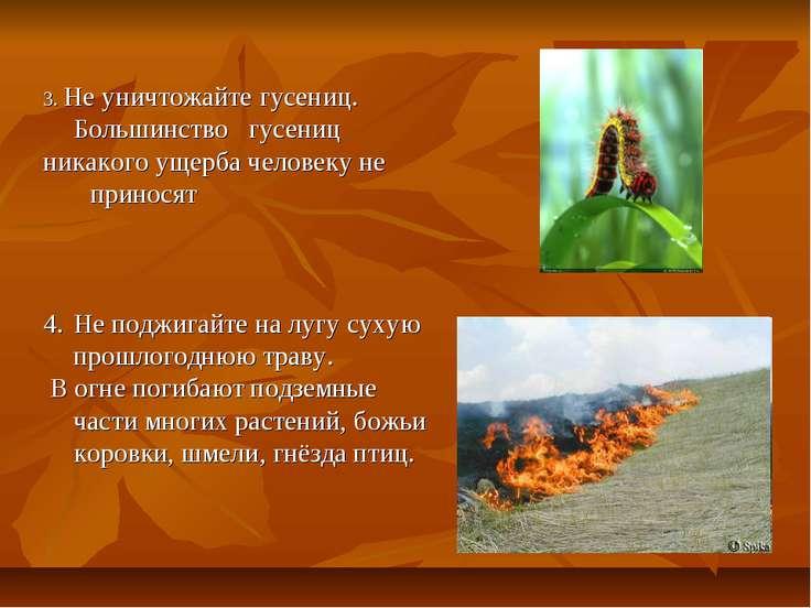 3. Не уничтожайте гусениц. Большинство гусениц никакого ущерба человеку не пр...