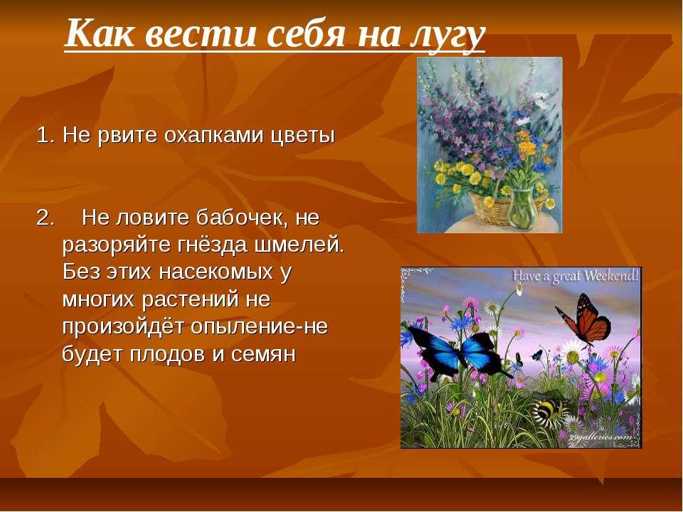 Не рвите охапками цветы 2. Не ловите бабочек, не разоряйте гнёзда шмелей. Без...