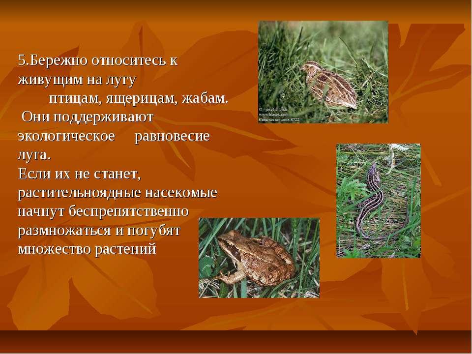 5.Бережно относитесь к живущим на лугу птицам, ящерицам, жабам. Они поддержив...