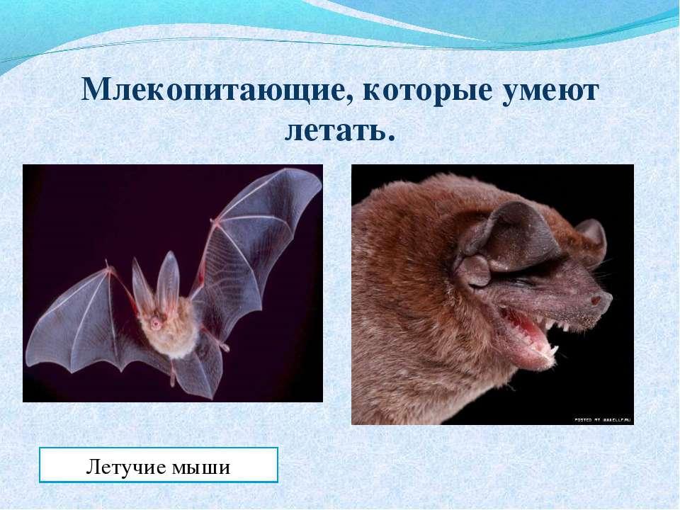 Млекопитающие, которые умеют летать. Летучие мыши