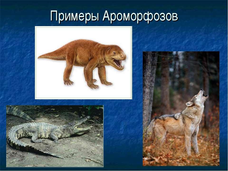 Примеры Ароморфозов