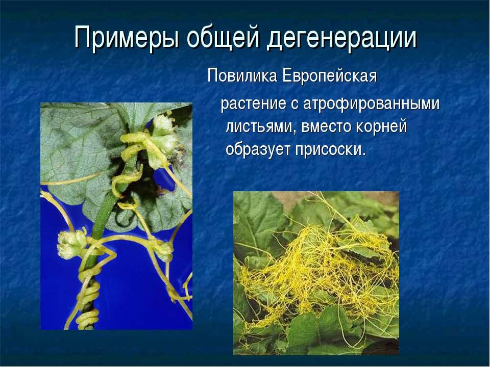 Примеры общей дегенерации Повилика Европейская растение с атрофированными лис...