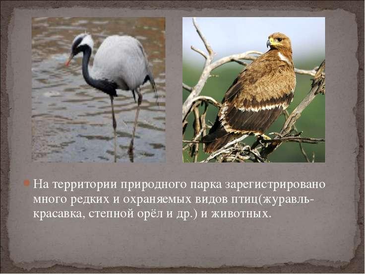 На территории природного парка зарегистрировано много редких и охраняемых вид...