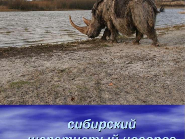 сибирский шерстистый носорог