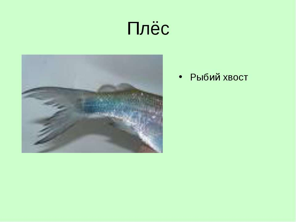 Плёс Рыбий хвост