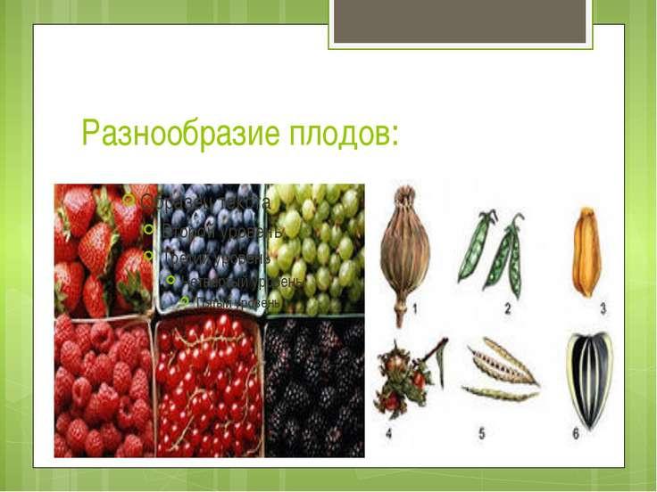 Разнообразие плодов: