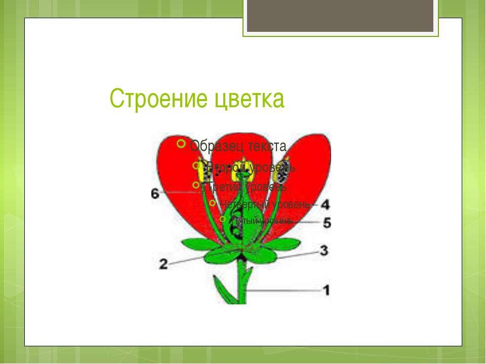 Строение цветка
