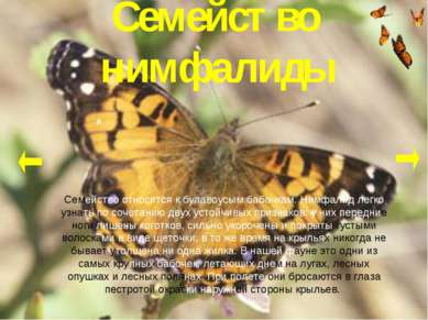 Семейство нимфалиды Семейство относится к булавоусым бабочкам. Нимфалид легко...