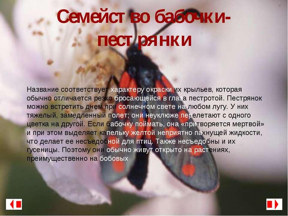 Семейство бабочки-пестрянки Название соответствует характеру окраски их крыль...