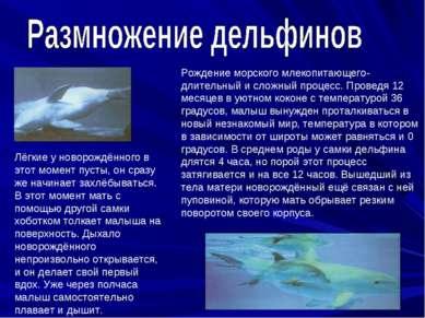 Рождение морского млекопитающего- длительный и сложный процесс. Проведя 12 ме...