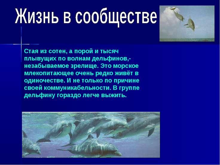 Стая из сотен, а порой и тысяч плывущих по волнам дельфинов,- незабываемое зр...