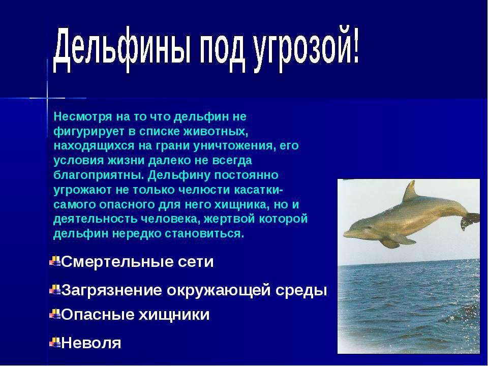 Несмотря на то что дельфин не фигурирует в списке животных, находящихся на гр...