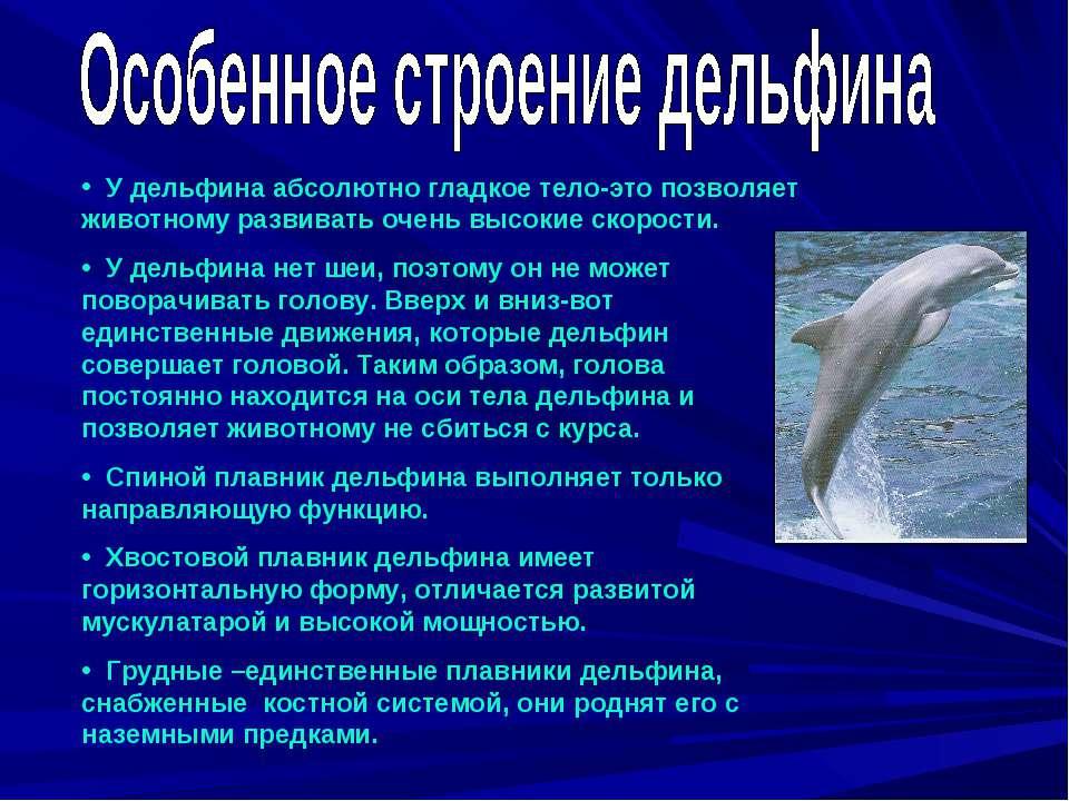 У дельфина абсолютно гладкое тело-это позволяет животному развивать очень выс...