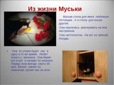 Из жизни Муськи Муська стала для меня любимым питомцем . А я стала для кошки ...