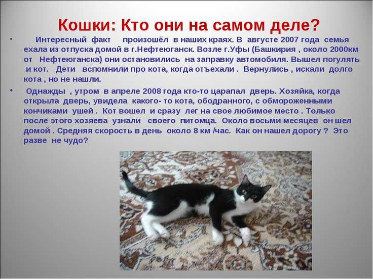 Кошки: Кто они на самом деле? Интересный факт произошёл в наших краях. В авгу...
