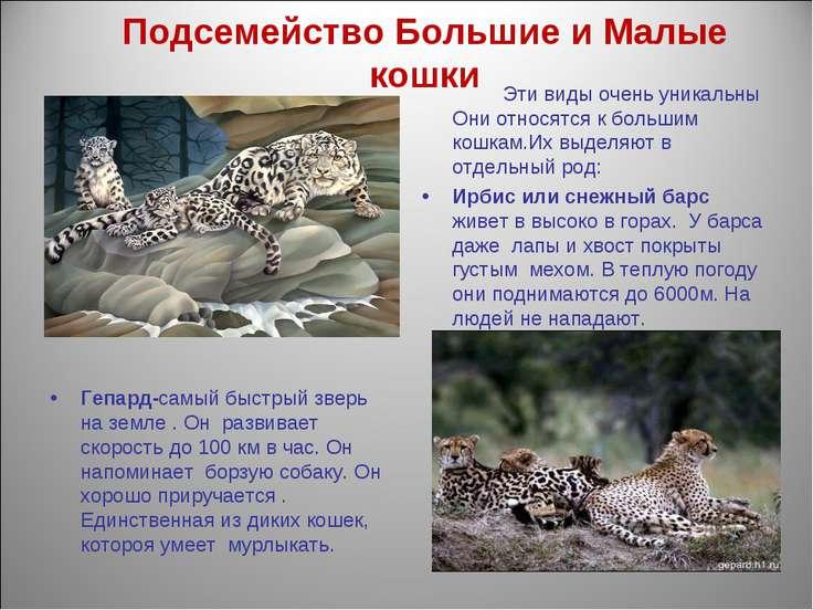 Подсемейство Большие и Малые кошки Эти виды очень уникальны Они относятся к б...