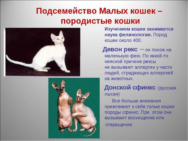 Подсемейство Малых кошек – породистые кошки Изучением кошек занимается наука ...