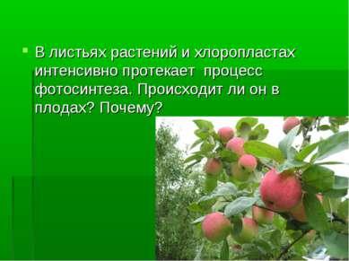 В листьях растений и хлоропластах интенсивно протекает процесс фотосинтеза. П...