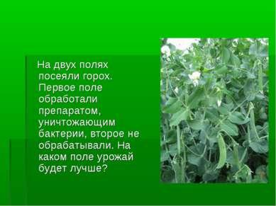 На двух полях посеяли горох. Первое поле обработали препаратом, уничтожающим ...