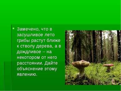 Замечено, что в засушливое лето грибы растут ближе к стволу дерева, а в дождл...