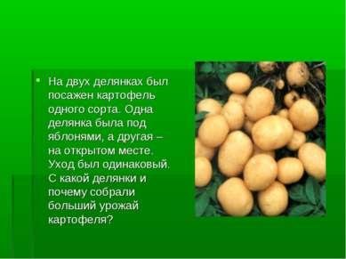 На двух делянках был посажен картофель одного сорта. Одна делянка была под яб...