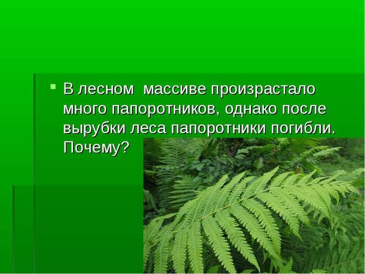 В лесном массиве произрастало много папоротников, однако после вырубки леса п...