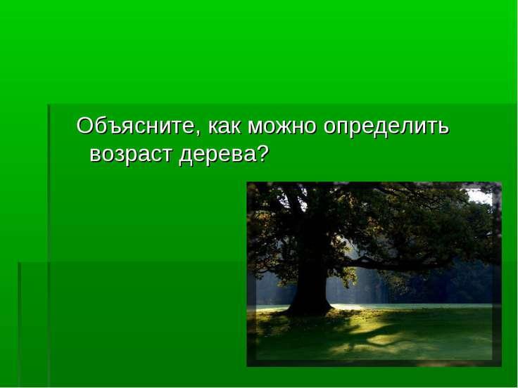 Объясните, как можно определить возраст дерева?