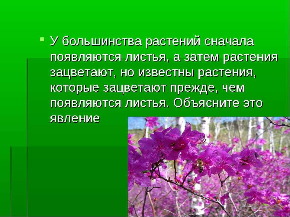 У большинства растений сначала появляются листья, а затем растения зацветают,...