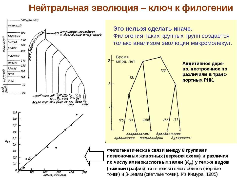 Филогенетические связи между 8 группами позвоночных животных (верхняя схема) ...