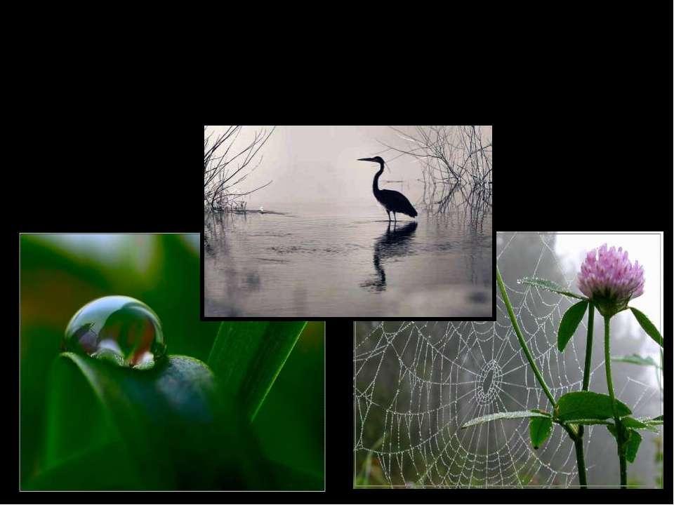 Дождь в жизни животных и растений