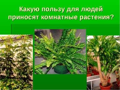 Какую пользу для людей приносят комнатные растения?