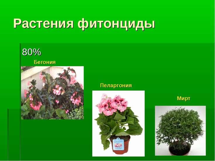 Растения фитонциды 80% Бегония Пеларгония Мирт