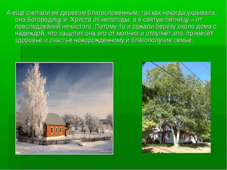 А ещё считали её деревом благословенным, так как некогда укрывала она Богород...