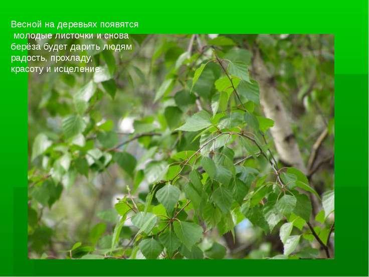 Весной на деревьях появятся молодые листочки и снова берёза будет дарить людя...