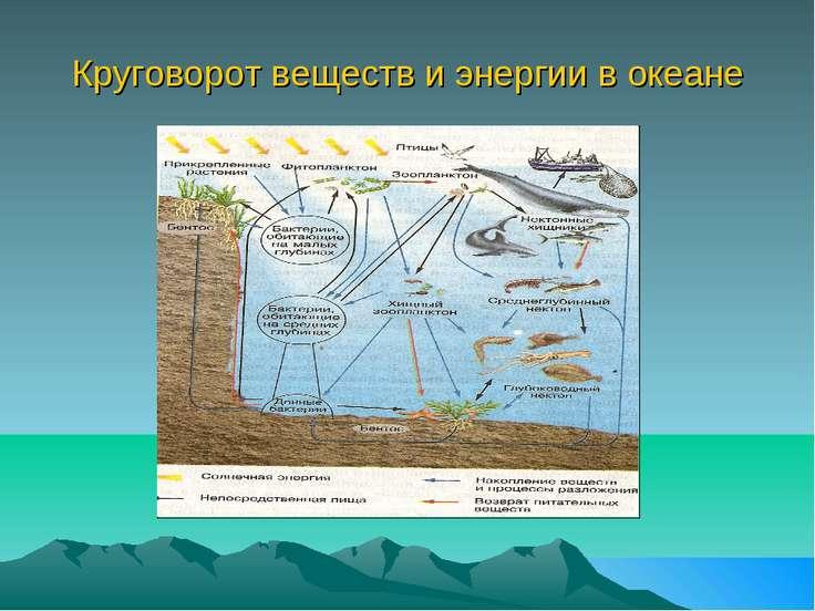 Круговорот веществ и энергии в океане Обмен веществ и энергии в океане