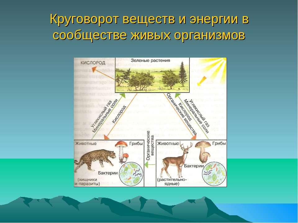 Круговорот веществ и энергии в сообществе живых организмов