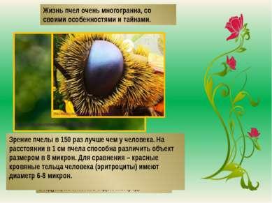 Жизнь пчел очень многогранна, со своими особенностями и тайнами. Пчела может ...