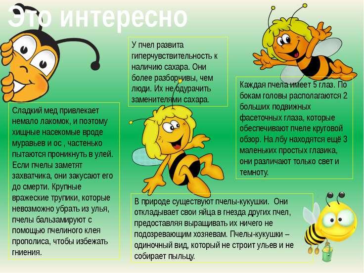 Сладкий мед привлекает немало лакомок, и поэтому хищные насекомые вроде мурав...