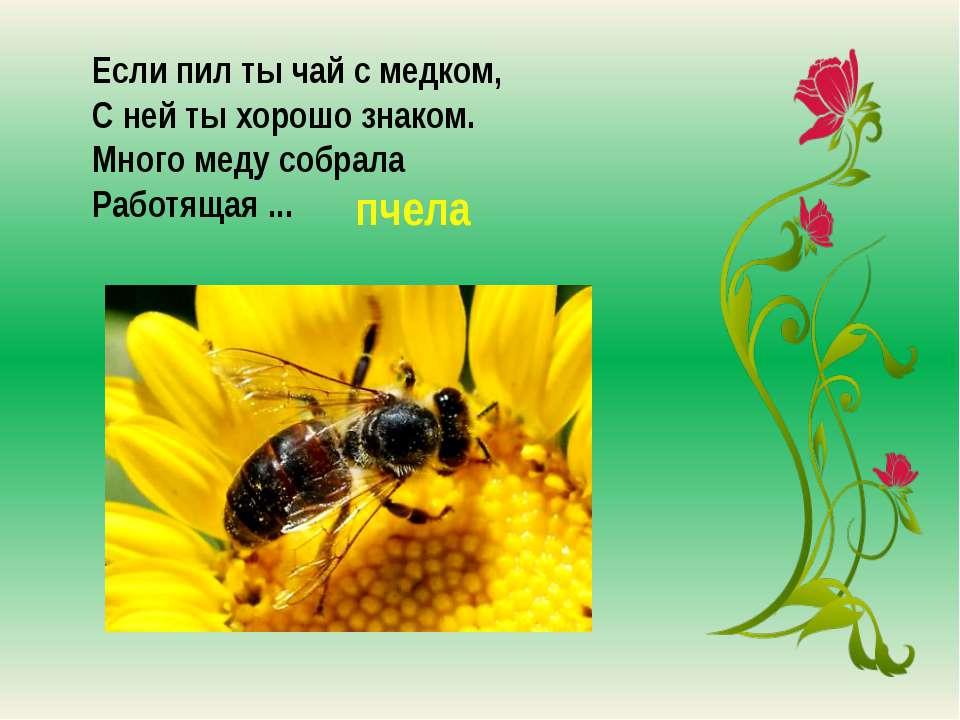 загадки картинки о пчелах дом
